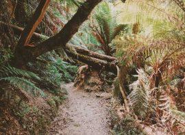 Otways National Park on the Great Ocean Road